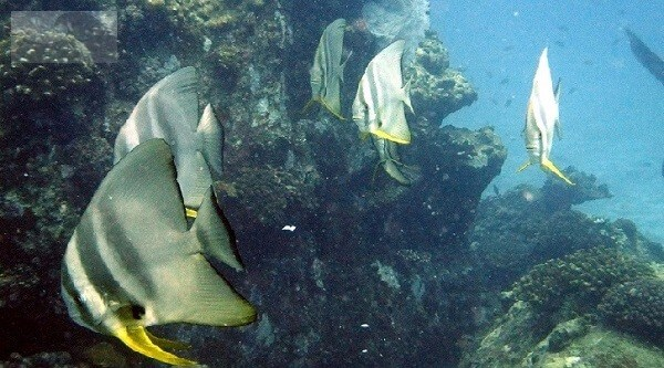 Diving La Digue Shark Rock Cayman Rock
